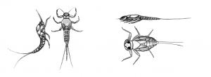 what trout eat stoneflies