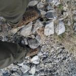 nimrod and sheep terrain 007